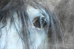 my fave, J. (me*voil - away in October) Tags: horse andalusian portrait texture jasminero face mane blue stallion