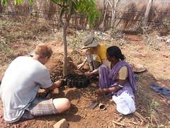 Nursery under the shade of a mango