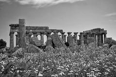 Selinunte : le Temple E (CpaKmoi) Tags: bw italia nb italie selinunte hera sicile sicila templee