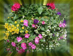 *** Basket Hanging Bouquet *** (Wolverine09J ~ 1.5 Million Views) Tags: floralfantasy gardenbouquet floraaroundtheworld rainbowofnaturelevel1red frameit~level01 hangingfloral springcultiverblossoms
