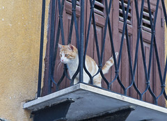 Ich will hier 'raus / I want to get out of here (schreibtnix on'n off) Tags: italien italy travelling nature animals closeup cat tiere reisen bars europa europe balcony balkon natur sicily katze palermo nahaufnahme gitter sizilien olympuse5 schreibtnix