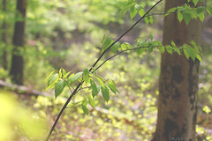 _____ (imJBD) Tags: park bridge trees summer sun lake green nature water june ma outdoors spring woods pretty massachusetts may rocky foliage april snakes medfield