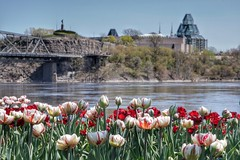 Tulips by the Ottawa River (beyondhue) Tags: bridge red white flower history monument statue museum river point spring gallery ottawa national alexandra shore tulip champlain gatineau nepean tulipfest beyondhue