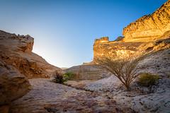 Golden Morning (kleptografy) Tags: asia uae abudhabi alain ae jebelhafeet totalphoto mubazzarahdam