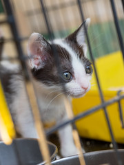 P4085733 (daisuke1230) Tags: cat olympus neko em  m43