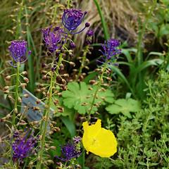 Mai Botanik - 2016-0023_Web (berni.radke) Tags: may growth mai botany botanicalgarden mnster botanik botanischergarten wachstum