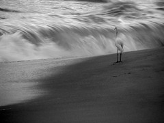(SANAND K) Tags: life sea india beach waves kerala egret kollam sanandkarun wed2016 gowildforlife