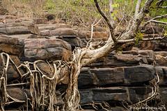 Savdav Waterfall Closeup (keyaart) Tags: tree waterfall rocks dry konkan savdav