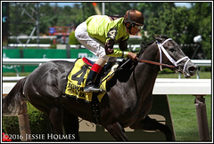 Silver Mission wins the Tremont (Spruceton Spook) Tags: horses horseracing tremont belmontpark silvermission
