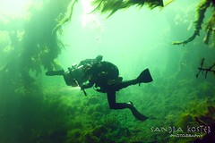 IMG_5955 (2) (SantaFeSandy) Tags: giant snapper turtle cave diving sinks lafayette blue springs state park sandrakosterphotography sandrakosterphotographycom sandykoster sandy sandra santafesandysandrakosterphotographycom sandrakoster algae green sink stevens 1 snake