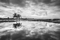 Praia da Atalaia (felipe sahd) Tags: praia beach brasil noiretblanc atalaia aracaju sergipe 123bw flickrunitedaward