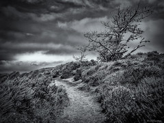 The Trail (JBRazza Photography) Tags: tree storm trail dirt road clouds cypress dark razza jbrazza johnrazza