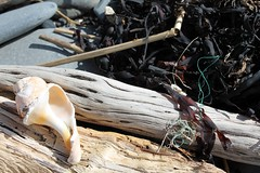 Beach Combing (chelseathepanda) Tags: wood seaweed beach rocks shell rope drift combing