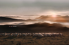 Amanecer en Gorbea (Jabi Artaraz) Tags: sol contraluz sheep country amanecer zb basque niebla euskadi gorbea rebaño brumas euskoflickr artaldea jartaraz