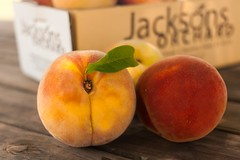 Contender- (Jackson's Orchard) Tags: kentucky peach orchard bowlinggreen contender bowlinggreenky jacksonsorchard
