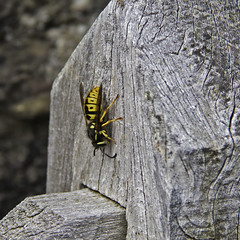 Construction Worker (me'nthedogs) Tags: wasp somerset signpost exmoor leighland