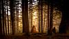 Bendora Arboretum (photo obsessed) Tags: act australia australiancapitalterritory bendoraarboretum canberra namadginationalpark oceania au