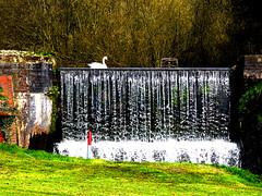 Park Brook Waterfall (Alan FEO2) Tags: park trees water grass outdoors waterfall swan stream brook cascade trentham golfclub 2oef