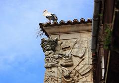 Stork above corner shield (tresmele) Tags: sky plant verde bird planta animal wall corner pared cielo pico shield stork cigea pjaro escudo cornershield