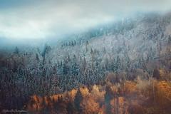 The Edge of Seasons (Raphaelle Monvoisin) Tags: blue autumn trees winter light sky mist mountain snow mountains alps cold tree beautiful fog clouds forest season golden spring warm frost