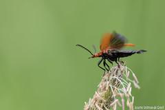 DN9A8591 (Josette Veltman) Tags: macro nature canon bug natuur bugs photowalk lente zwolle landschap insecten ivn westerveldsebos photowalkzwolle