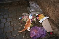 modern times (michel nguie) Tags: africa street light pet film analog cat milk garbage market flash dump fez rubbish marocco filth dustbin fes fs milkpack michelnguie
