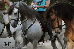 Caballos trabajando en pista // Horses working on track (Marina Quilon Photography) Tags: horses horse caballo cheval caballos cavalos ecuestre cavalo pferd equestrian equine chevaux doma dressage equitacion