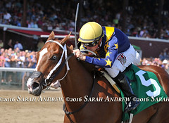 Bowie breaks her maiden at Saratoga- love her unusual eyes (Rock and Racehorses) Tags: webbowieska3196sarahandrew ny thoroughbred myra racehorse saratoga nyra blueeye bowie asmussen
