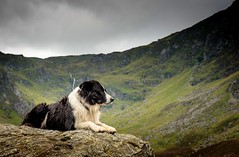 34/52 Serious Mist in Corrie Fee (JJFET) Tags: 52 32 weeks for dogs mist border collie dog sheepdog