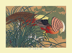 Goering's cymbidium and golden pheasant (Japanese Flower and Bird Art) Tags: flower goering's cymbidium orchid goeringii orchidaceae bird golden pheasant chrysolophus pictus phasianidae rakusan tsuchiya nihonga woodblock print japan japanese art readercollection