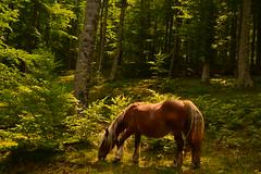 _DSC2175 (Soule Xiberoa) Tags: nature soule xiberoa