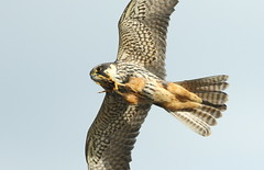 hobby (davecr24) Tags: hobby cotswoldwaterpark lowermillestate