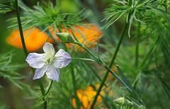 Belle de printemps (mamietherese1) Tags: world100f earthmarvels50earthfaves phvalue
