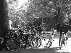 op de fiets naar het park (michieljacker) Tags: rotterdam rotjeknor park summer fiets bicycle spring tree boom zomerzondag euromast