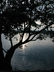 (Kelly Rene) Tags: sunset tree nature water silhouette cambodge cambodia southeastasia outdoor reservoir kh siemreap battambang indochina baray srahsrang krongsiemreap