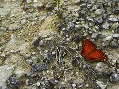Esperando (tatianalozano75) Tags: naturaleza colores mariposa tranquilidad pureza