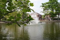 Victoria Park lake. (bm1551cc) Tags: trees lake fountain 50mm victoriapark cheshire f14 widnes halton sigmaex canon5dmark2