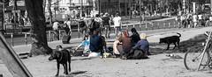 DSC_0634 (paolomarozzi) Tags: punk beggar hardlife burgain