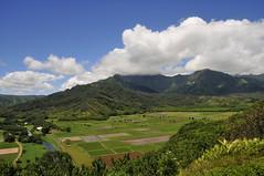 ʻŌpaekaʻa Fall - II (Anders Magnusson) Tags: statepark fall hawaii waterfall nikon kauai wailua wailuariverstatepark andersmagnusson ʻōpaekaʻa ʻōpaekaʻafall