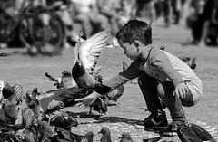 Op de Dam (ed mather) Tags: blackandwhite amsterdam dam pigeons duiven