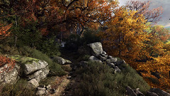 Vanishing of Ethan Carter 03 (hyperlost47) Tags: sunlight tree leaves forest dark woods rocks path games eerie ethan creepy spooky gaming carter vanishing thick pcgaming screenshoit