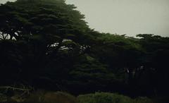California Roadtrip (Joice Gonzalez.) Tags: california trees film nature 35mm nikon bigsur pfeifferstatepark kodakportra