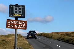 News Day Livestock 5 (jadedyermedia) Tags: road car sign speed accident devon roadsign awareness incident livestock dartmoor increase collision dartmoornationalpark