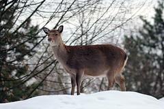 IMG_8609 (u.wittwer) Tags: park zoo schweiz switzerland tiere suisse tierpark heimat arth naturpark goldau widi