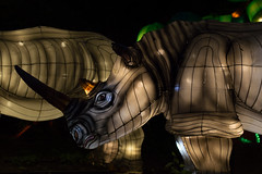 _DSC9534_2 (Elii D.) Tags: light fish flower animal night zoo monkey neon dragons lantern lampion dargon