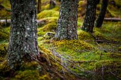 (seb2nogent) Tags: scotland ecosse hightlands natuer thefallsofmesach