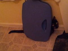 DiDi attempting to hide (MissMaryLogan) Tags: didi cat tortoiseshell pet