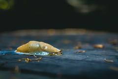 Slug [132] (yegor454) Tags: canada art tourism nature vancouver digital 35mm canon outdoors photography perfect energy exposure bc emotion bokeh expression perspective sigma columbia explore experience british slug neat 365 epic lense 60d