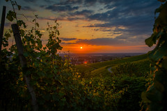 Sunset Vines (M.Schreiber) Tags: sunset sun clouds town vines dorf hill wolken berge stadt grapes sonne reben trauben rebland
