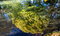 Green Reflectiona (Jocey K) Tags: autumn trees newzealand christchurch reflections river shadows may avon monavale avonriver